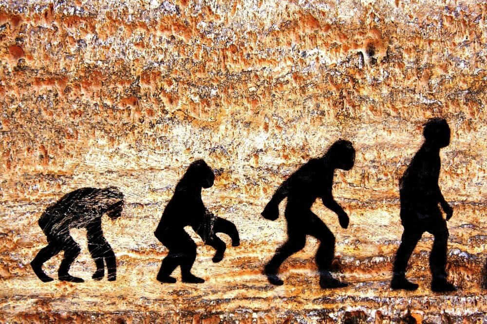 Human-Evolution-Ergomotion